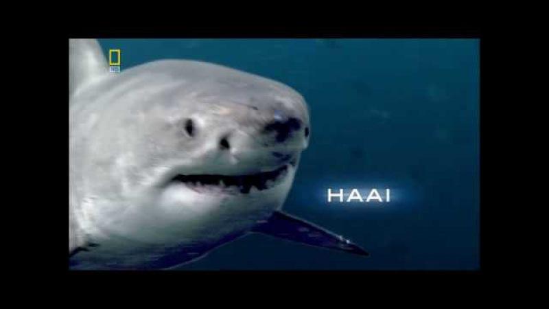 Большая белая акула - [Full HD 1080i]