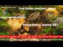 Тетра Шольца хемиграмус шольца Hemigrammus scholzei Ahl как отнерестить рыбку