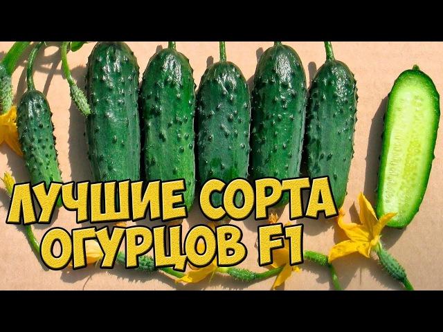 Семена огурцов 🌱ТОП 7 лучших сортов огурцов, которые не оставят вас без урожая