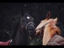 ~ Конный спорт ~ xylo - America ~ Equestrian sport ~