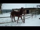 Лошадка Соната