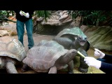 Meet and Greet our giant tortoises!