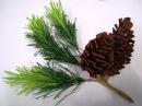 DIY - How to make paper flower - pine nut leaf by crepe paper - Làm quả thông giấy nhún