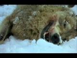 Юрий Дёмин   Схватка с волками