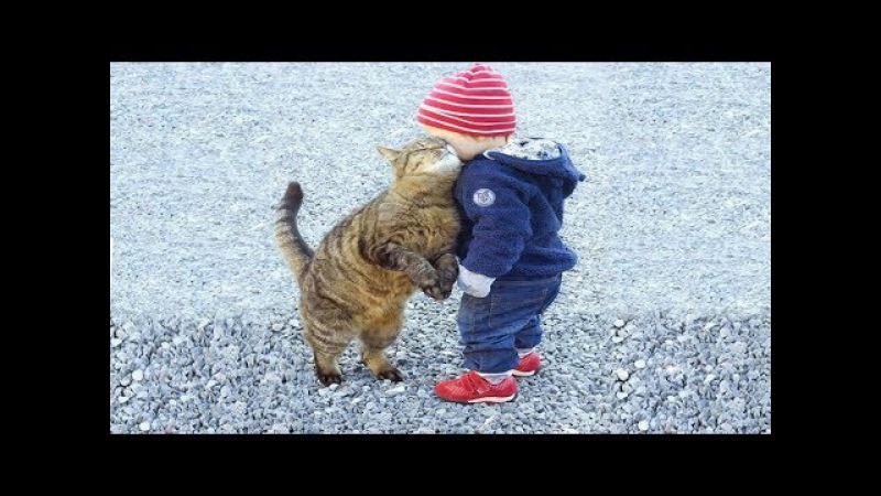 Babies and Cat are Best Friend Babies and Cats Playing Together 2
