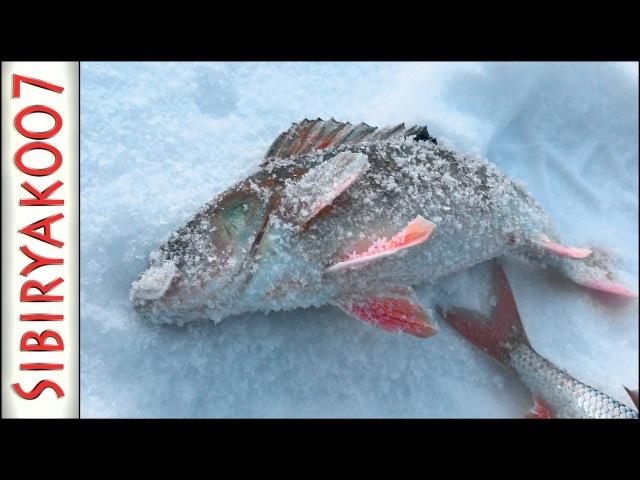 Волшебная ЛУНКА!.. Рыбалка в ГЛУХОЗИМЬЕ на безмотылку чёртик. Зимняя леска AKKOI MASK Frozen.