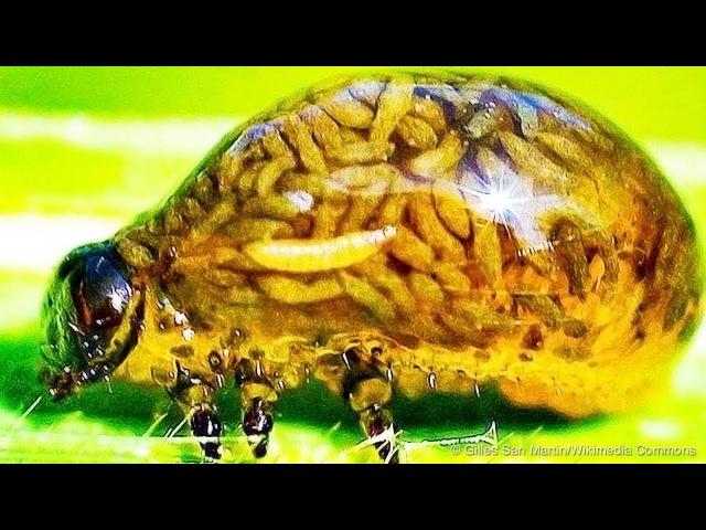 10 Живых Существ, Которые Доказали, Что Суперспособности Существуют