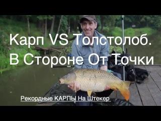 Карп vs Толстолоб. В Стороне От точки. Рекордные КАРПЫ На Штекер