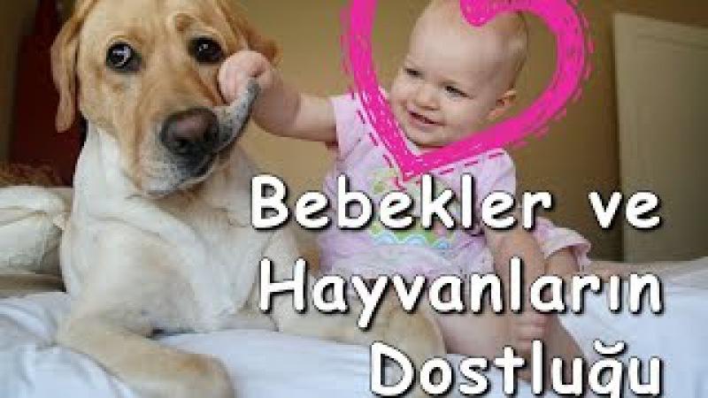 Bebekler ve Köpekler Komik Hayvanlarla Bebeklerin Dostluğu Komik Bebek ve Hayvan Videoları