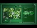 Травы Крыма Выпуск 82 СТЕВИЯ