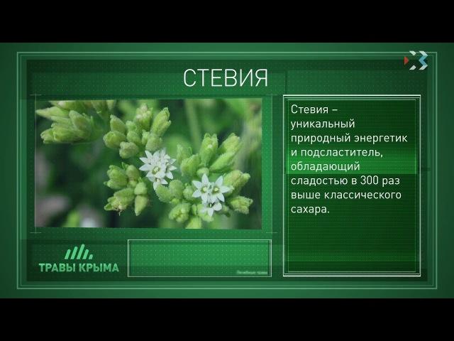 Травы Крыма. Выпуск 82. СТЕВИЯ