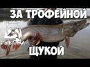 Русская Рыбалка 4 Трофейная щука на спиннинг