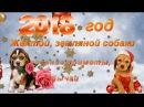 2018 год-  Жёлтой Земляной Собаки.🎄 Описание,приметы,обычаи