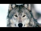 Gennady Golovkin Highlights I The Wolf(HD)