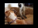 PetsTV - Just Sleep, Dog and Monkey