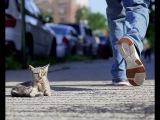 Сотни людей проходили мимо слепого, полуживого котенка и только эта пара не оста...