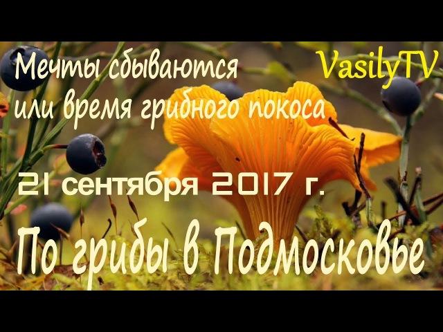 По грибы в Подмосковье 21 сентября 2017 г. Мечты сбываются или время грибного покоса.
