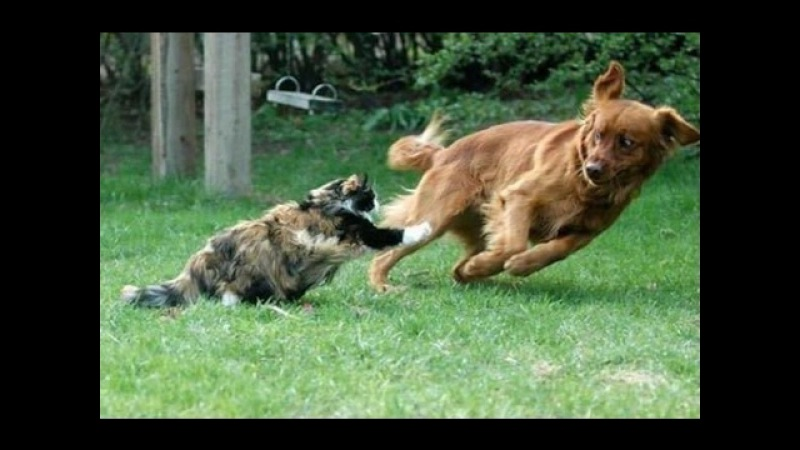 Боевые коты! Приколы с котами кошки против собак. Fighting cats! Сats against dogs.