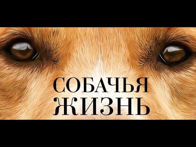 Собачья жизнь.Фильм