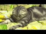 Котик устал и заснул! Прикол/The cat is tired and fell asleep!