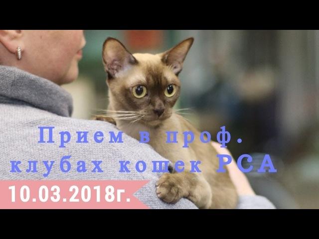 Прием в проф. клубах кошек PCA 10.03.2018г