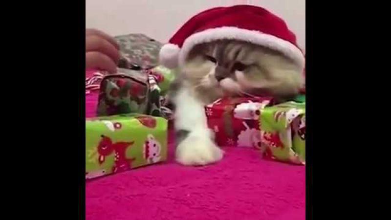 She won't let anyone touch her presents смотреть онлайн без регистрации