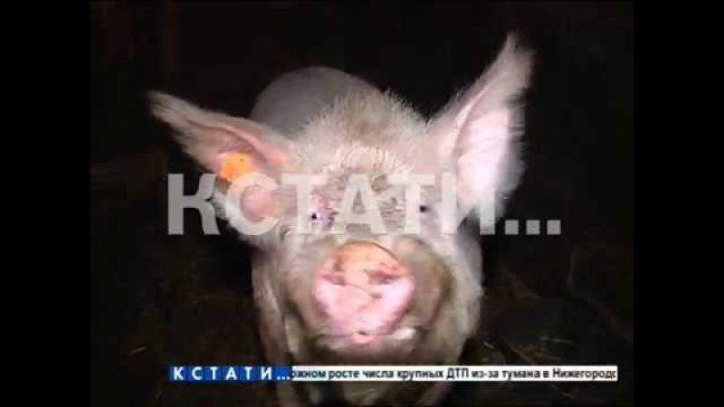 Убить на опережение - мелких фермеров и частников в Павловском районе убеждают у...