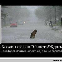 Анкета Денис Пелкин