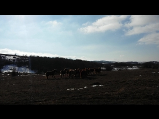 Табун лошадей (Караби-яйла 05.11.2017)