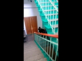 Катюша Дворцова - Live