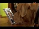 Т С Домик с собачкой 9 серия 2002г