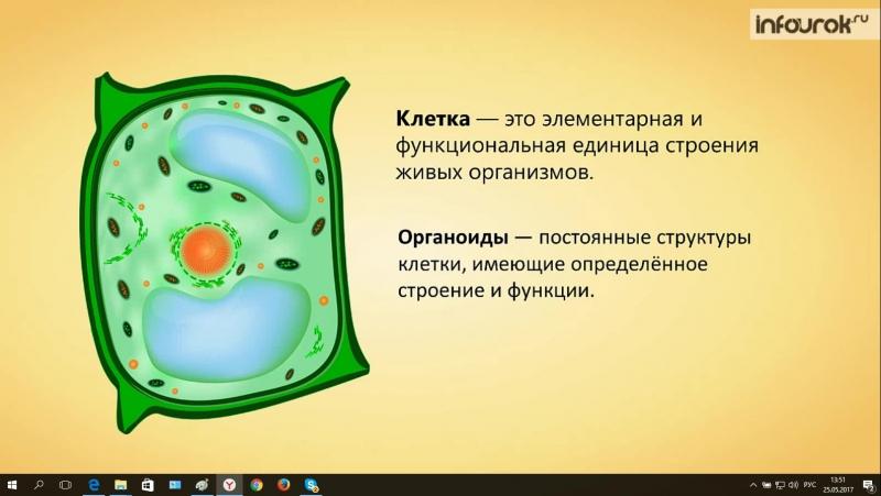 Строение растительной клетки биология 6 класс