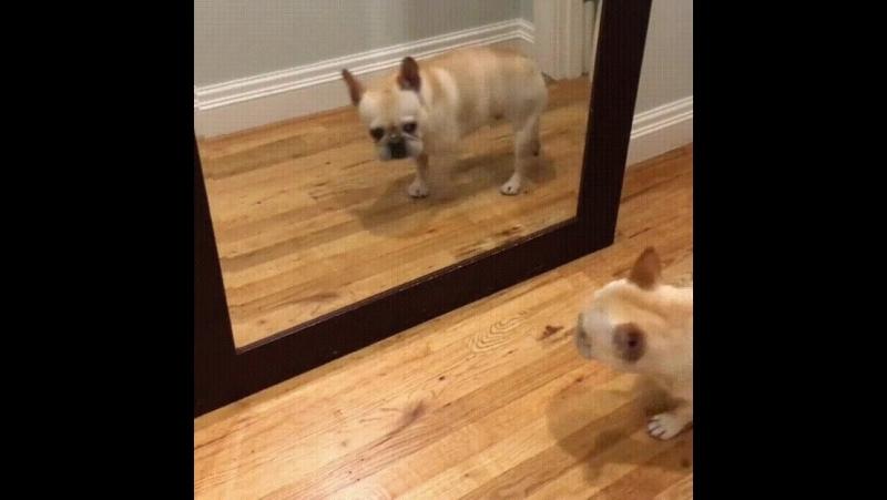 Когда с утра увидела себя в зеркало