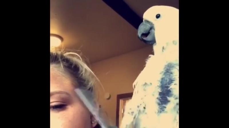 Папугай-садист