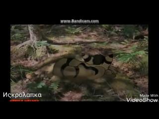 Белка и Ежевика[Коты-Воители]