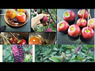 Яблоки в карамели! Helloween| Как бы повар :D