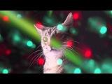 Meow Mix Song | EDM Cat Remix