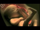 Life in the womb (9 months in 4 minutes) HD - Presented to You from PSNX