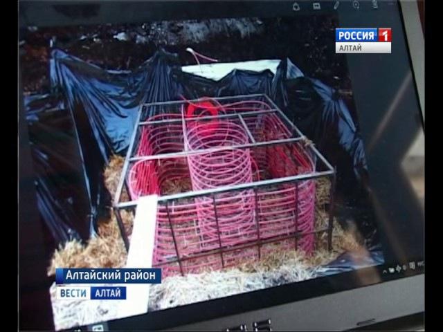 В Алтайском районе появится экспериментальная теплица – солнечный вегетарий