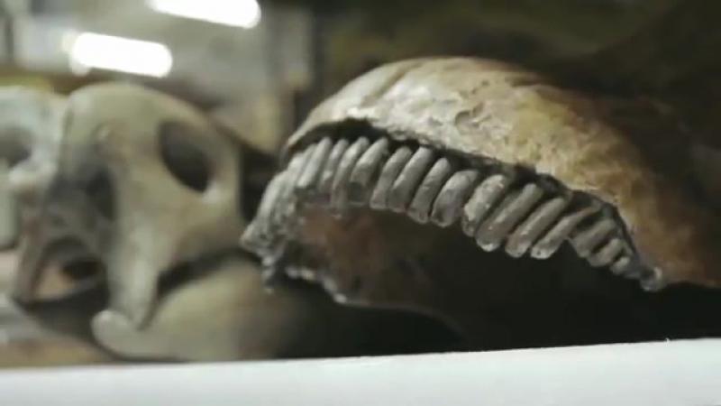 Интересная находка: зуб динозавра изменит представления о прошлом Земли - палеонтологи