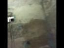 Сильвестр Сталлоне поделился видео со съёмок фильма «План побега 3».