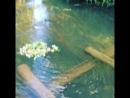 Традиционное пускание венка на воду