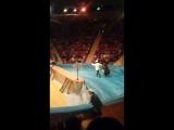 цирк в караганде к юбилею Юрия Никулина