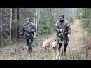 Русская охота на зайца с гончими по чернотропу! 18