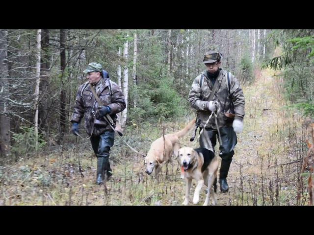 Русская охота на зайца с гончими по чернотропу 18