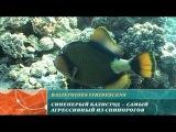 Предельная глубина - Острова Бразерс. Предельная глубина