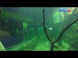 Вести.Ru: Тысячи видов обитателей моря: в Москве открывается новый гигантский океанариум