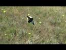 Шмель-пло́тник фиоле́товый[1] (лат. Xylocopa violacea) — вид одиночных пчёл семейства Apidae. Крупное одиночное насекомое, один