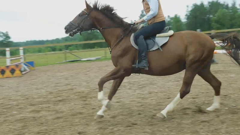 Анна и Пуаро 12.07.17 (тренировка)