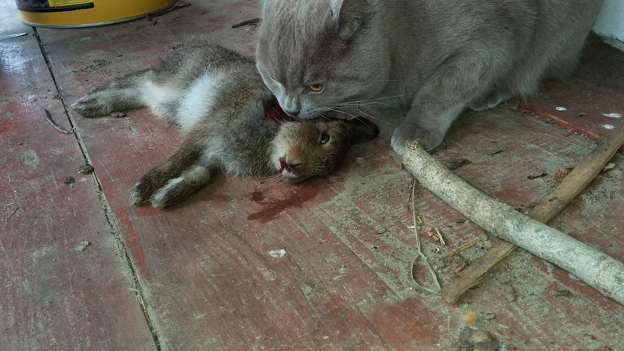 кот и заяц